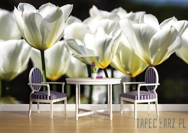 Fototapeta Białe tulipany 1101