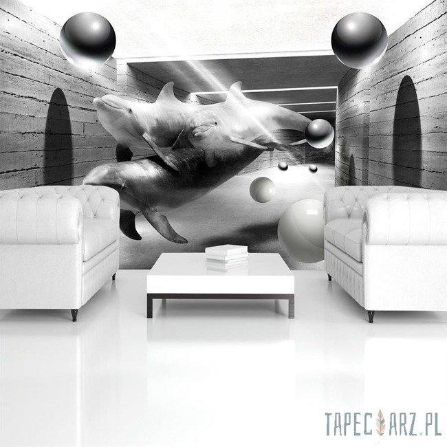 Fototapeta Czarno-białe delfiny w tunelu 3446