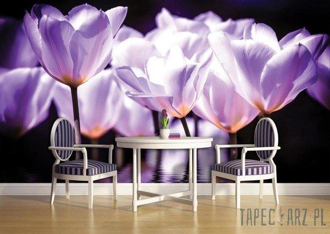 Fototapeta Fioletowe tulipany 1104