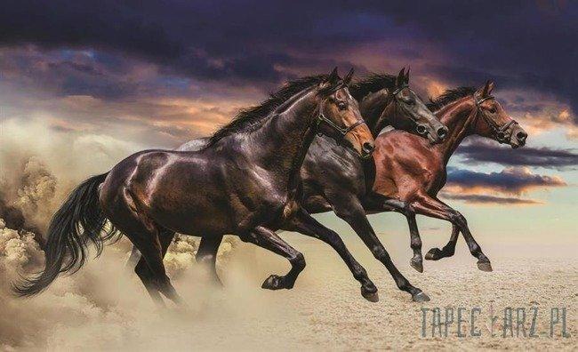 Fototapeta Galopujące konie 1217