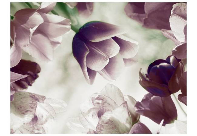 Fototapeta - Heavenly tulips