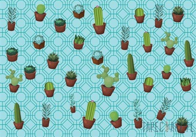 Fototapeta Kaktus 11076