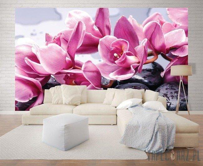 Fototapeta Kamienie spa i różowy storczyk 1337