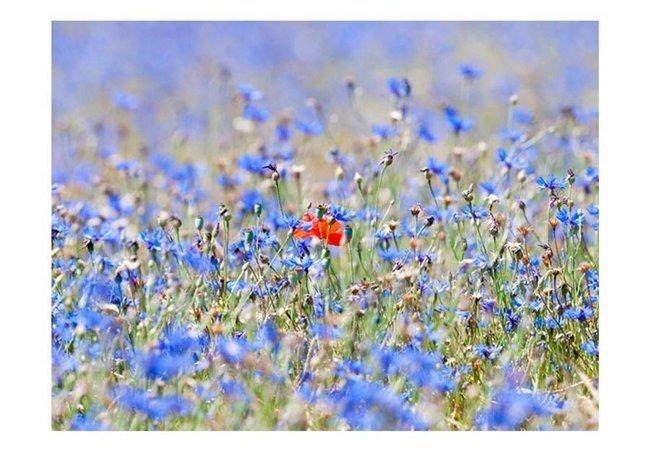 Fototapeta - Łąka w kolorze nieba - chabry