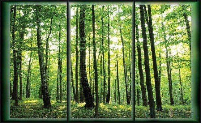 Fototapeta Okno z widokiem na las 495