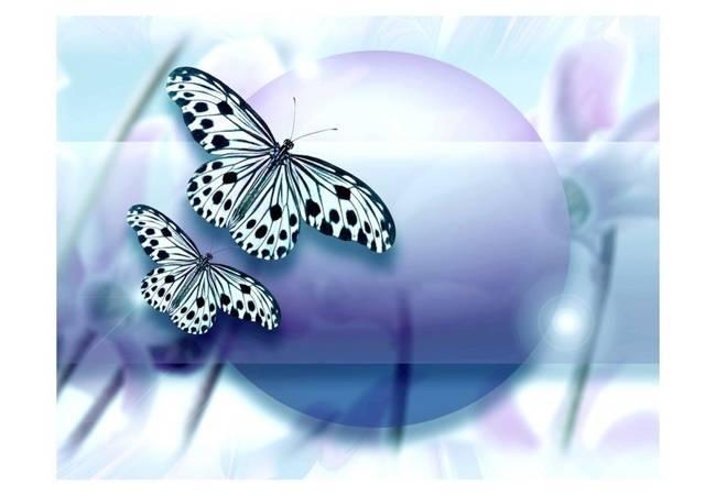 Fototapeta - Planeta motyli
