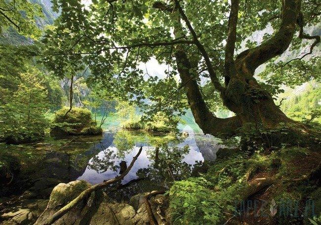 Fototapeta Staw ukryty w lesie 3457