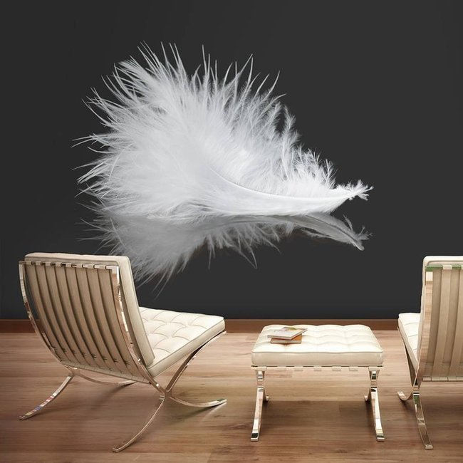 Fototapeta - White feather