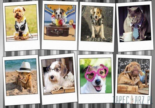 Fototapeta Zdjęcia zabawnych zwierzaków 10454