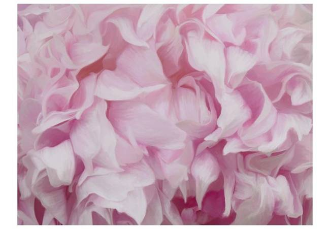 Fototapeta - azalia (różowy)