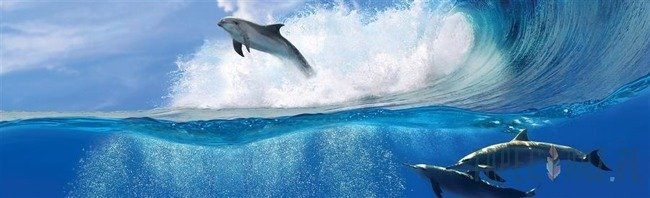 Fototapeta na flizelinie Delfiny 442VEE
