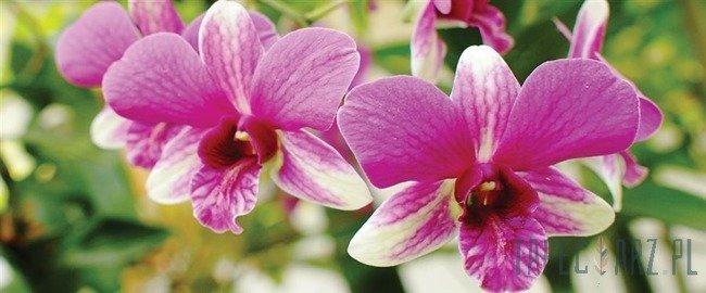 Fototapeta na flizelinie Kwiaty 3402VEP