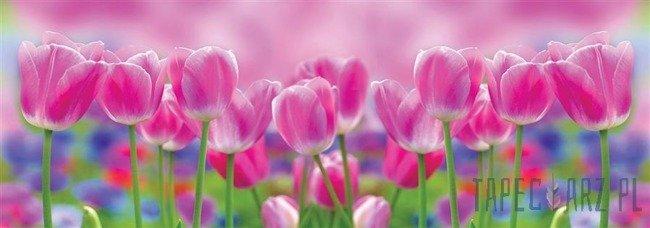 Fototapeta na flizelinie Różowe tulipany 1547VEE