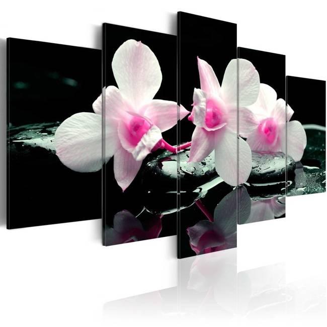 Obraz - Odpoczynek orchidei